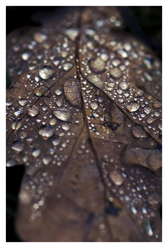 autumn drops